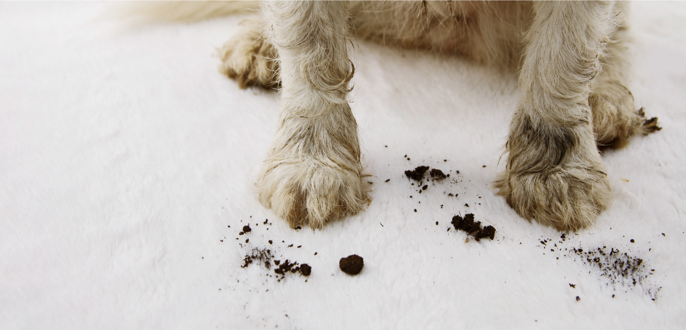 DIRTY-PAWS-1