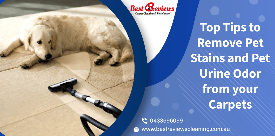 Top-tips-to-remove-pet-stains-and-pet-urine-odor-from-your-carpets