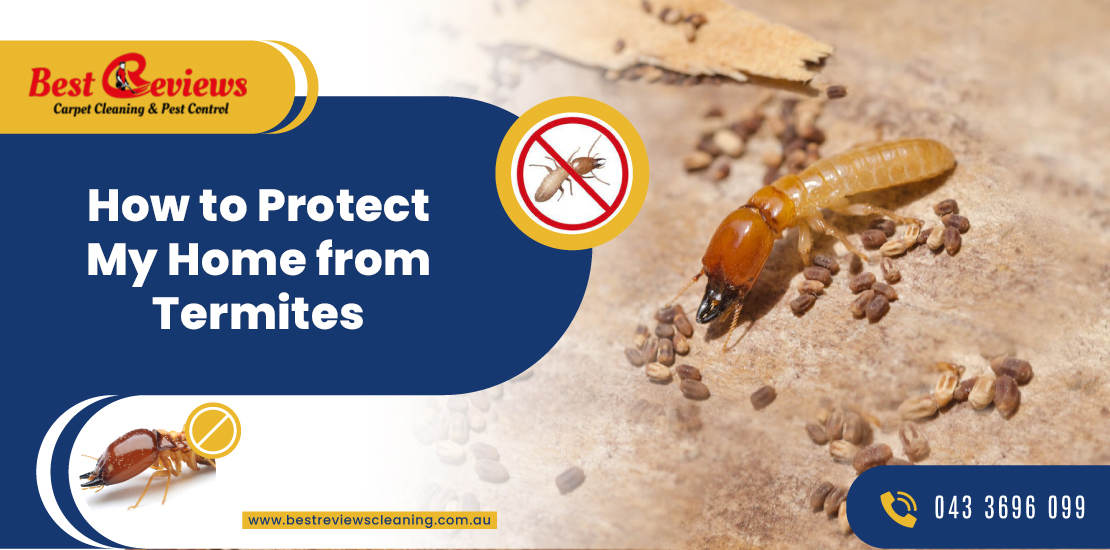 How to protect My Home from Termites